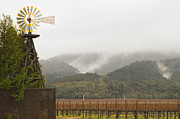 Mick Burkey - Fog on the Vineyard