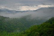 Gatlinburg Posters - Fog over the Smokies Poster by Nancy Mueller