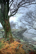 Dan Carmichael - Fog Rocks and Lichen in...