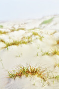 Oats Prints - Fog Sand and Dune Grass - Outer Banks Print by Dan Carmichael