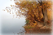 Tree And Water Posters - Foggy Autumn Riverbank Poster by Carol Groenen