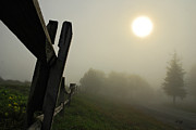Blue Knob Photos - Foggy Country Road by Lois Bryan