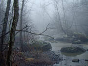 Mother Nature Photos - Foggy Day on the Unami Creek by Mother Nature