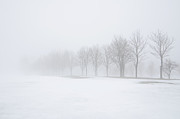 Foggy Day With Snow Print by Donna Doherty