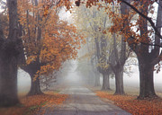 Country Lanes Metal Prints - Foggy Driveway Metal Print by Wendell Thompson
