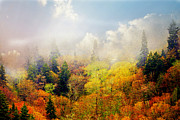 Marty Koch - Foggy Fall
