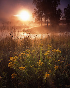 Glacial Park Posters - Foggy Flowers Poster by Ray Mathis