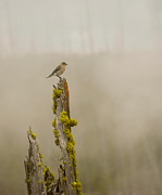 Birches Photography - Foggy Friend