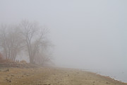 Bo Insogna Photos - Foggy Lake Shoreline View by James Bo Insogna