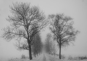 Winter Art Framed Prints - Foggy lane Framed Print by Veikko Suikkanen