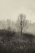 Trees. Field Prints - Foggy Meadow Print by HD Connelly