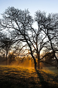 Oaks Prints - Foggy Morning 2 Print by Philip Tolok