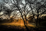 Oaks Prints - Foggy Morning 4 Print by Philip Tolok