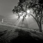 Featured Framed Prints - Foggy Morning And Assiniboine Park Framed Print by Ken Gillespie