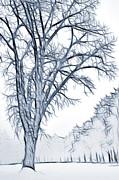 Steve Ohlsen - Foggy Morning Landscape - Fractalius 2