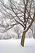 Foggy Morning Landscape - Fractalius 3 Print by Steve Ohlsen