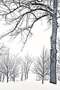 Steve Ohlsen - Foggy Morning Landscape - Fractalius 6