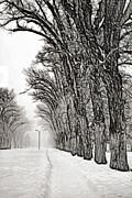 Steve Ohlsen - Foggy Morning Landscape - Fractalius 7