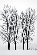 Bare Trees Mixed Media Metal Prints - Foggy Morning Landscape - Fractalius  Metal Print by Steve Ohlsen