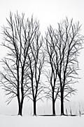 Steve Ohlsen - Foggy Morning Landscape - Fractalius