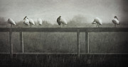 Deborah Smith - Foggy Morning Lineup 2