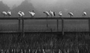 Deborah Smith - Foggy Morning Lineup