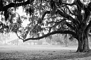 Coosaw Framed Prints - Foggy Morning on Coosaw Plantation Framed Print by Scott Hansen