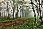 Metal Art Photography Digital Art Posters - Foggy Morning on the Cherohala Skyway in North Carolina I Poster by Dan Carmichael