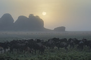 Sandra Bronstein - Foggy Morning - Serengeti