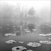 Daviess County Photo Metal Prints - Foggy Morning Metal Print by Wendell Thompson