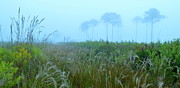 James Dudrow - Foggy Myakka Morning