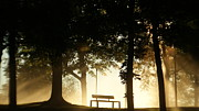 Estonia Originals - Foggy park bench by Pille Karu
