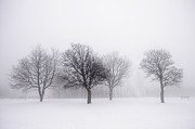 Snowy Trees Prints - Foggy park with winter trees Print by Elena Elisseeva