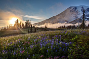Mount Rainier Framed Prints - Foggy Rainier Sunset Framed Print by Mike Reid