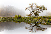 Debra and Dave Vanderlaan - Foggy Reflections Landscape