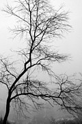Danielle Smith Metal Prints - Foggy Silhouette Metal Print by Danielle Smith