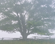 Split Rail Fence Posters - Foggy Summer Morning Poster by Alan L Graham