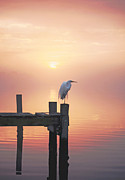 Snowy Egret Prints - Foggy Sunset on Egret Print by Benanne Stiens