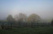 Pinot Posters - Foggy Vineyard Morning Poster by Jean Noren