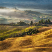 Cocktails Pyrography Prints - Fogy morning on the hill in Tuscany Print by Jaroslaw Pawlak