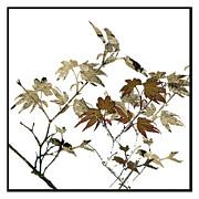 Liz  Alderdice - Foliage For Fun
