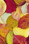 Alan L Graham - Foliage Quilt