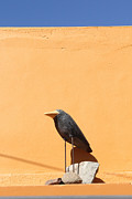 Folk Art Crow Todos Santos Print by Linda Queally