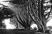 Tree Lines Framed Prints - Follow Nature - Black and White Photography inspired by Ansel Adams Framed Print by Shayne Skower