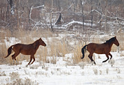Wild Horse Photos - Follow the Leader by Mike  Dawson