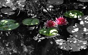 Corina Bishop - Follow the lily pads
