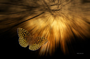 Also Digital Art - Following the Light Yellow Butterfly by Thomas Woolworth