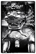 Dog Pics Photos - Foo Dog by John Rizzuto