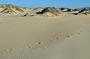 Landscape Photograpy Posters - Footprints in the Dunes Poster by Bruce Gourley
