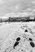 Black And White Prints Prints - Footprints in the snow Print by John Farnan